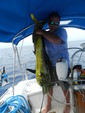 39 ft. Catalina 39 Sloop Boat Rental Miami Image 13