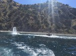 32 ft. Regal Boats 3060 Window Express Cruiser Boat Rental Los Angeles Image 38