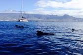 46 ft. Sunseeker Porto Fino 46 Motor Yacht Boat Rental Adeje Image 4