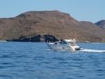 52 ft. Cruisers Yachts 500 Express V-Drive Cruiser Boat Rental  Image 4