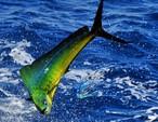 43 ft. Bertram Sportfish Boat Rental Nassau Image 3