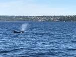 42 ft. Catalina 42 Fin Keel Sloop Boat Rental Seattle-Puget Sound Image 11