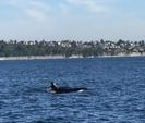42 ft. Catalina 42 Fin Keel Sloop Boat Rental Seattle-Puget Sound Image 10