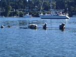 42 ft. Catalina 42 Fin Keel Sloop Boat Rental Seattle-Puget Sound Image 26
