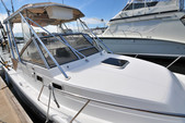 26 ft. Shamrock 246 Adventure Offshore Sport Fishing Boat Rental Puerto Vallarta Image 2