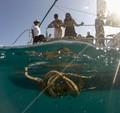 40 ft. Other  CustomCatamaran Catamaran Boat Rental Hawaii Image 1