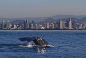37 ft. Ranger (California) 37 Cruiser Racer Boat Rental San Diego Image 5