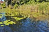16 ft. Sylvan Marine 1600 Explorer SC Pontoon Boat Rental Orlando-Lakeland Image 31