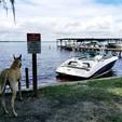 19 ft. Yamaha AR190  Jet Boat Boat Rental Orlando-Lakeland Image 2